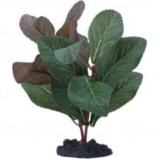 Prime Растение Гигрофила 13 см