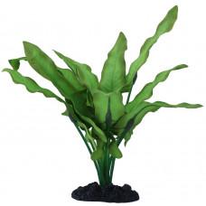 Prime Растение Анубиас Хастифолия,13 см