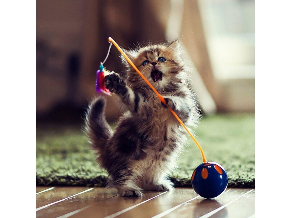 Котенок в доме: важные покупки